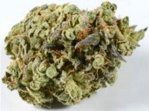 Hawaiian strain