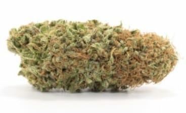 Millennium strain