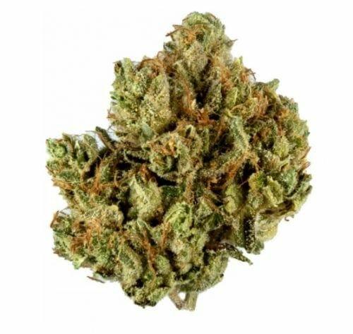 Special Kush strain