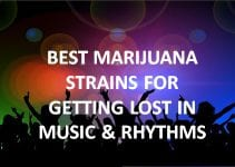 best cannabis strains for music