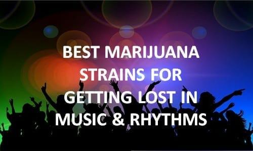 best cannabis strains for music