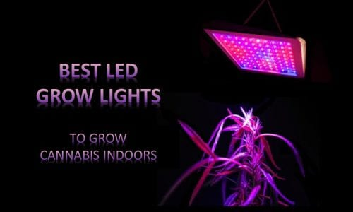 Best Cannabis LED Grow Lights Review