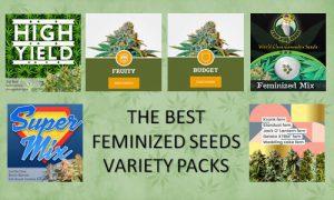 the best feminized seed variety packs